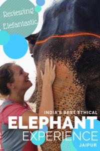 elefantastic ethical elephant experience jaipur review