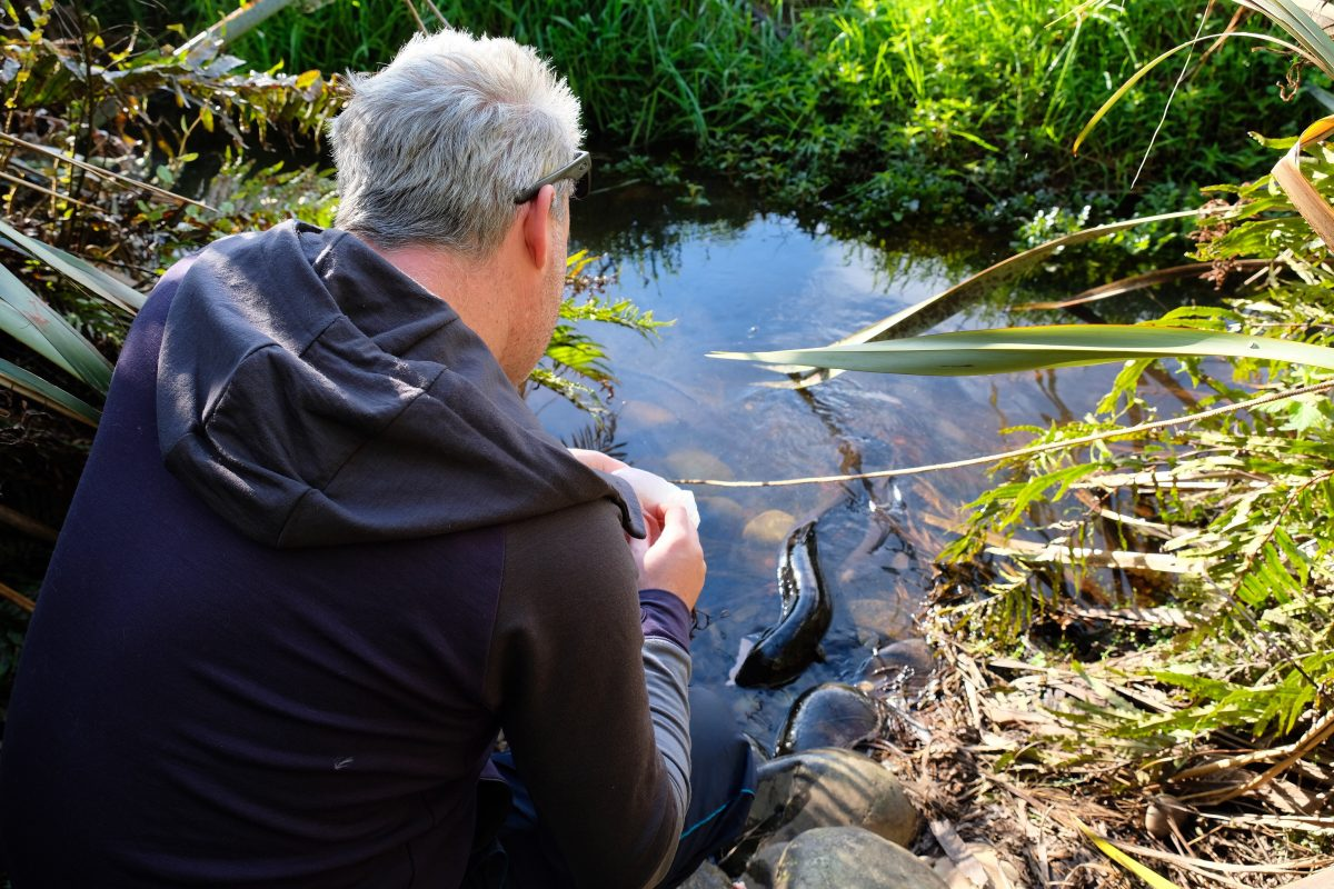Where to Feed Wild Eels for Free in New Zealand: Hokitika Uncovered
